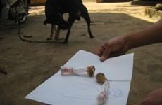 Đắk Nông: Ăn nhầm bả chó hình viên kẹo, 2 cháu nhỏ bị ngộ độc