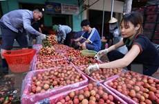 Việt Nam xúc tiến xuất khẩu 100 tấn vải thiều sang Australia