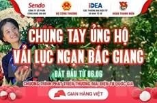 Các sàn thương mại điện tử chung tay tiêu thụ vải thiều Bắc Giang