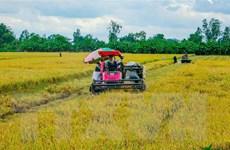 Thị trường nông sản tuần qua: Giá lúa có xu hướng giảm mạnh