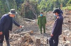 Phá rừng phòng hộ Đà Lạt, 2 người bị phạt 200 triệu đồng