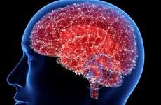 Phát hiện về cơ chế trong não bộ thúc đẩy bệnh Alzheimer