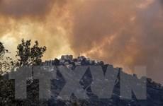 Algeria bắt 36 đối tượng quá khích sát hại nghi phạm gây cháy rừng