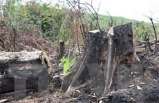 Phú Yên lập Tổ công tác xử lý tình trạng phá rừng tại huyện Sơn Hòa