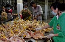 Hà Nội phát hiện gần 130 vụ vi phạm an toàn thực phẩm