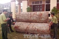 Hai kiểm lâm bắt tay lâm tặc buôn lậu gỗ quý, lĩnh án tù