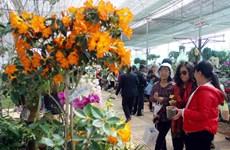 Rau và hoa Đà Lạt sẵn sàng cho thị trường Tết Giáp Ngọ