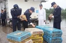 Cấm tuyệt đối nhập khẩu gia cầm dưới mọi hình thức