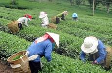 Đắk Nông dành hơn 180 tỷ đồng giúp bà con dân tộc thiểu số