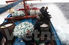 Phú Yên: Gần 53 tỷ đồng cho ngư dân khai thác hải sản xa bờ