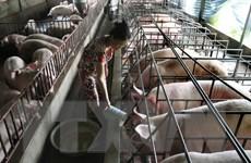 Tiền Giang ứng dụng tiến bộ khoa học công nghệ vào chăn nuôi