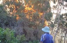Vụ cháy rừng trên núi Bà Hỏa gây thiệt hại khoảng 20ha rừng