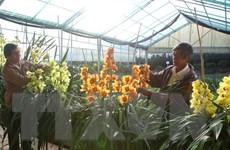 """Lâm Đồng gắn nhãn hiệu chính thức """"Hoa Đà Lạt"""" cho các loại hoa"""