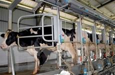 Ngành sữa đa dạng hóa sản phẩm đáp ứng nhu cầu tiêu dùng
