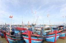 Quảng Ngãi sẽ đầu tư trên 1.600 tỷ đồng đóng mới tàu cá