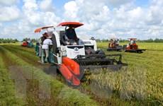 ĐBSCL: Sản lượng lúa Đông Xuân và Hè Thu đạt trên 20 triệu tấn