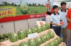 Dưa hấu trái mùa tại tỉnh Hậu Giang bán được giá cao