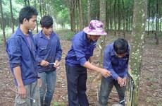 Kim ngạch thương mại Tây Nguyên với Đông Bắc Campuchia tăng
