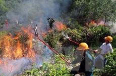 Thanh Hóa: Cơ bản khống chế cháy rừng bằng đường băng cản lửa