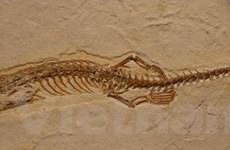 Brazil lần đầu tiên phát hiện mẫu vật hóa thạch rắn 4 chân