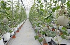 Nông nghiệp công nghệ cao ở Đồng Nai: Đầu tư nhiều, thu lãi lớn