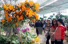 """Festival hoa Đà Lạt 2015: """"Không gian hoa"""" muôn màu khắp thành phố"""