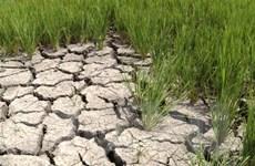 Nhiều thành phố ở Nam Bộ có khả năng thiếu nước sinh hoạt vì hạn, mặn