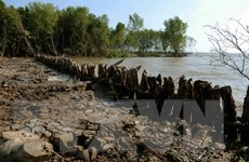 Tỉnh Trà Vinh đầu tư 350 tỷ đồng nâng cấp hệ thống đê biển