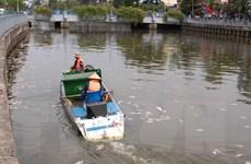 Công bố nguyên nhân 14 tấn cá chết trên kênh Nhiêu Lộc-Thị Nghè