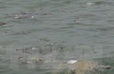Tỉnh Quảng Bình sát cánh cùng ngư dân vượt qua khó khăn