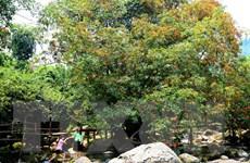 Thả về Vườn Phong Nha-Kẻ Bàng 48 cá thể động vật quý hiếm