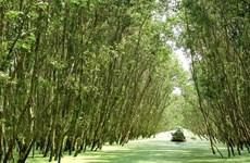 Rừng tràm nước phèn Hậu Giang thành khu du lịch sinh thái lớn nhất