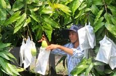 Australia chính thức mở cửa thị trường cho xoài Việt Nam