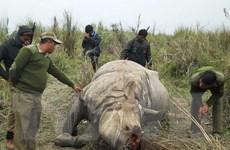 Việt Nam tham dự Hội nghị CITES lần thứ 17 tại Nam Phi