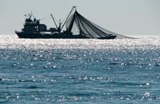 Bộ Ngư nghiệp Myanmar cấm đánh bắt cá ở một số đảo ở miền Nam