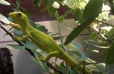 Phát hiện 163 loài mới tại khu vực Tiểu vùng sông Mekong