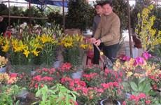 Trung tâm giao dịch hoa sẽ giúp ngành hoa phát triển bền vững