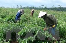 Tập đoàn Cao su Việt Nam sẽ phát hành cổ phiếu lần đầu vào quý 2