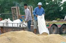 Thái Lan xuất khẩu 3,4 triệu tấn gạo trong 4 tháng đầu năm
