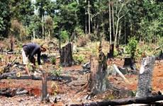 Đắk Nông: Bí thư Chi bộ Công ty Lâm nghiệp Đức Hòa bị cách chức