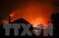 Cháy rừng ở Bồ Đào Nha: Số người chết liên tục gia tăng