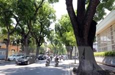 Trồng cây xanh tại các đường giao thông để giảm tiếng ồn, khói bụi
