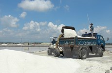 Thời tiết không thuận lợi, diêm dân Khánh Hòa thua lỗ trong mùa muối