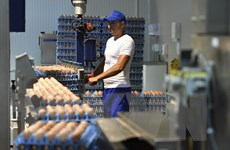 """Thổ Nhĩ Kỳ bác bỏ cáo buộc đã xuất khẩu trứng """"bẩn"""" của EC"""