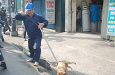 TP.HCM: Nhiều ý kiến trái chiều từ việc bắt giữ chó thả rông