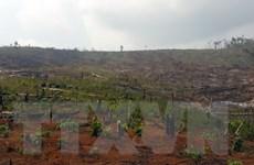 """Đánh giá hiện trạng rừng: Nhiều diện tích rừng đột ngột bị """"khai tử"""""""