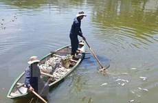Khẩn trương tìm nguyên nhân cá nuôi lồng bè chết ở đảo Phú Quý
