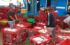 """Việt Nam nỗ lực khắc phục sự cố """"thẻ vàng"""" về khai thác hải sản"""