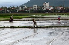 Gần 59.000ha đã có nước phục vụ gieo cấy vụ Đông Xuân