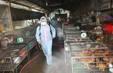Triển khai tháng vệ sinh và tiêu độc khử trùng môi trường đợt 1